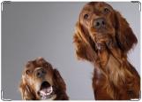Обложка на паспорт с уголками, собачки