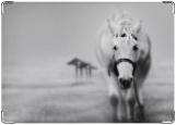 Обложка на паспорт с уголками, Белая лошадь
