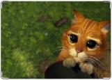 Блокнот, взгляд кота