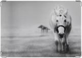Блокнот, Конь