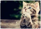Блокнот, котенок