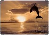 Блокнот, Дельфин