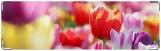 Визитница/Картхолдер, Тюльпаны