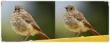 Обложка на зачетную книжку, Горихвостка- птенец