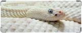 Обложка на студенческий, Белая змея