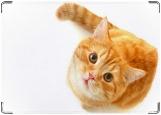 Блокнот, рыжий кот
