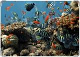 Блокнот, Морской аквариум