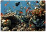 Обложка для свидетельства о рождении, Морской аквариум