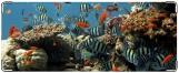 Кошелек, Морской аквариум