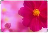 Обложка для свидетельства о рождении, Розовый бутон