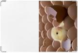 Обложка для свидетельства о рождении, цыплёнок