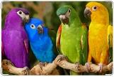 Обложка на ветеринарный паспорт, попугаи