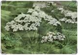Обложка на медицинскую книжку, Лечебные травы