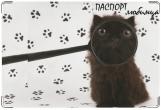 Обложка на ветеринарный паспорт, черный котенок