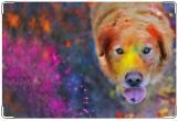 Обложка на ветеринарный паспорт, Краски