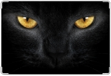Обложка на ветеринарный паспорт, Эти глаза...