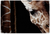 Обложка на ветеринарный паспорт, Жираф
