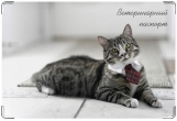 Обложка на ветеринарный паспорт, Пижон