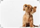 Обложка на ветеринарный паспорт, Меломан