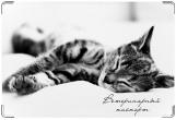 Обложка на ветеринарный паспорт, Спящий кот