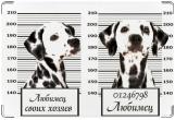 Обложка на ветеринарный паспорт, Любимец своих хозяев