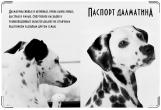 Обложка на ветеринарный паспорт, Далматин