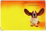 Обложка на ветеринарный паспорт, ушастик