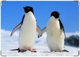 Обложка на паспорт с уголками, пингвины