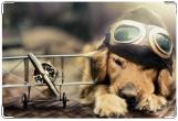 Обложка на ветеринарный паспорт, Летчик