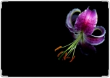 Блокнот, лилия