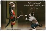 Обложка на ветеринарный паспорт, Международный ветеринарный паспорт кота.