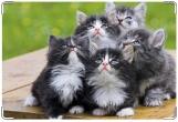 Обложка на ветеринарный паспорт, котята
