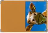 Обложка на ветеринарный паспорт, МУ