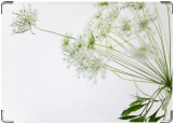 Блокнот, полевой цветок