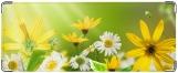 Кошелек, Весна.