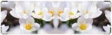 Визитница/Картхолдер, цветение