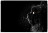 Обложка на ветеринарный паспорт, Чёрный кот