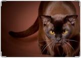 Обложка на автодокументы с уголками, кошка
