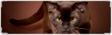 Визитница/Картхолдер, кошка