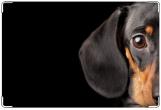 Обложка на ветеринарный паспорт, ветеринарный паспорт такса
