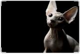 Обложка на ветеринарный паспорт, ветеринарный паспорт кот сфинкс