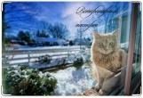 Обложка на ветеринарный паспорт, Кошка за окошком