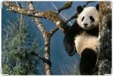 Обложка на ветеринарный паспорт, Панда