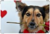 Обложка на ветеринарный паспорт, пёс