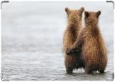 Обложка на паспорт с уголками, медведи