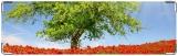 Визитница/Картхолдер, дерево и маки