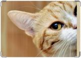 Обложка на паспорт с уголками, рыжий кот