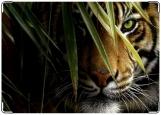 Обложка на автодокументы с уголками, Тигр