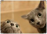 Блокнот, коты