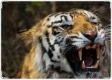 Обложка на паспорт с уголками, тигр
